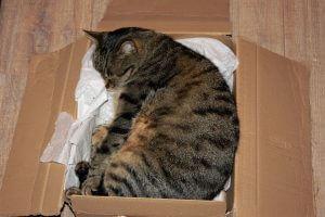 cat-1332688_1920-min